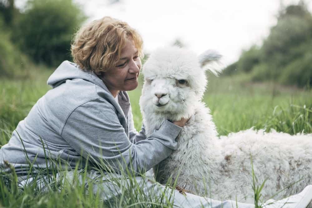 Isabelle Van Hecke knuffelt alpaca